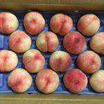 福島県の安くて美味しい桃を黒羽果樹園からお取り寄せ
