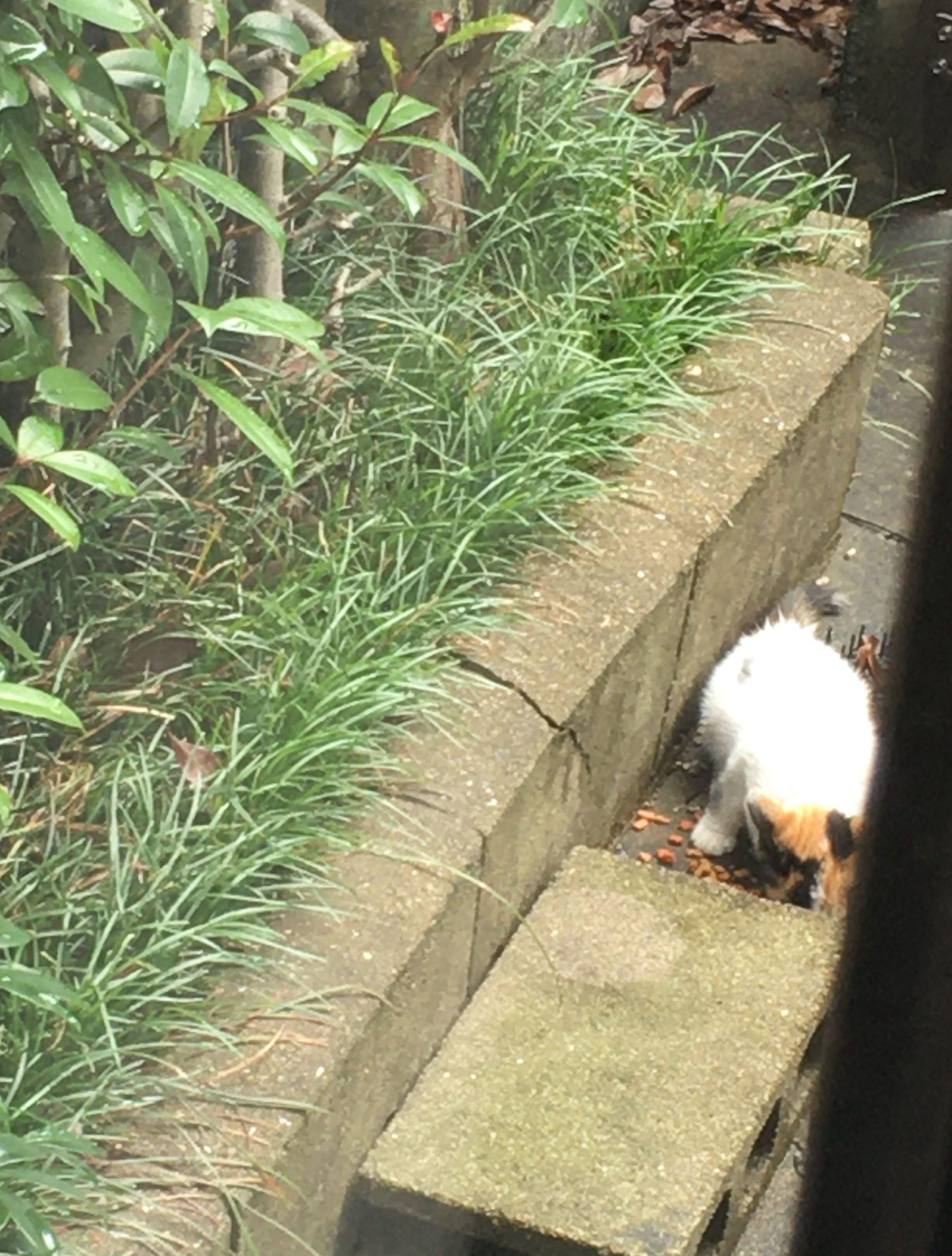 三毛猫0723