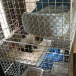 猫の保護用に100均のワイヤーネットで3段ケージを作ったよ
